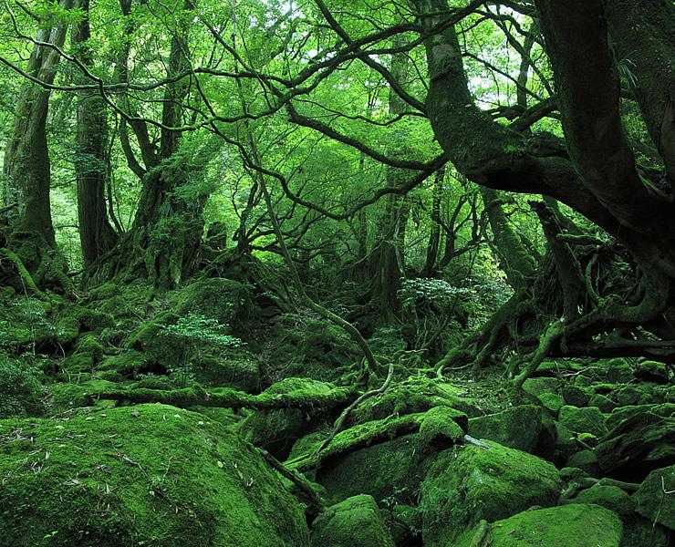 屋久島(鹿児島県)